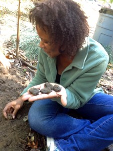 Mark Mandica's wife Crystal does her part to help rescue the Orme Park turtle hatchlings.