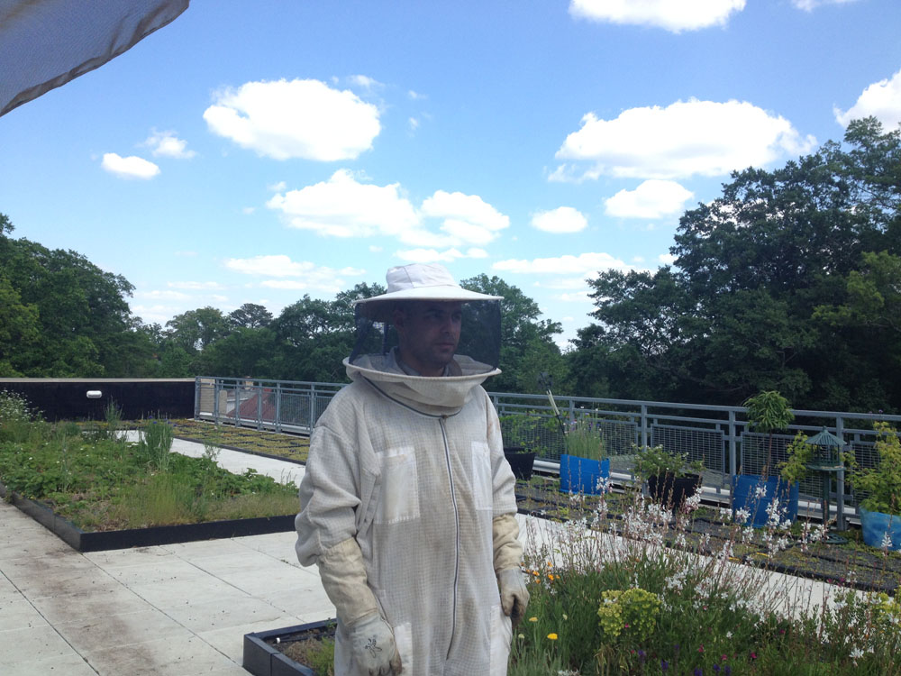 Spark Garden Center Bees A Great Learning Opportunity