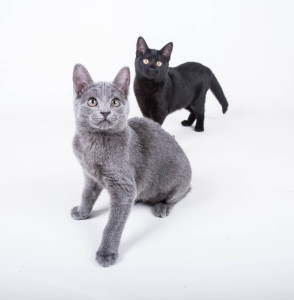 Kittens-12