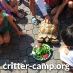 critter-camp_media_square